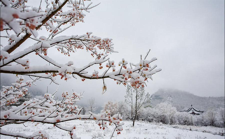 佛国之雪中梅花